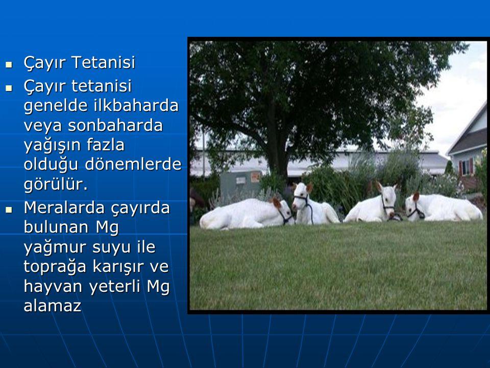 Çayır Tetanisi Çayır Tetanisi Çayır tetanisi genelde ilkbaharda veya sonbaharda yağışın fazla olduğu dönemlerde görülür.