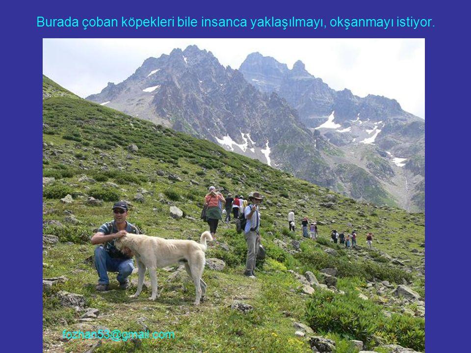 Burada çoban köpekleri bile insanca yaklaşılmayı, okşanmayı istiyor. fozhan53@gmail.com