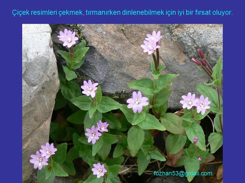 Çiçek resimleri çekmek, tırmanırken dinlenebilmek için iyi bir fırsat oluyor. fozhan53@gmail.com