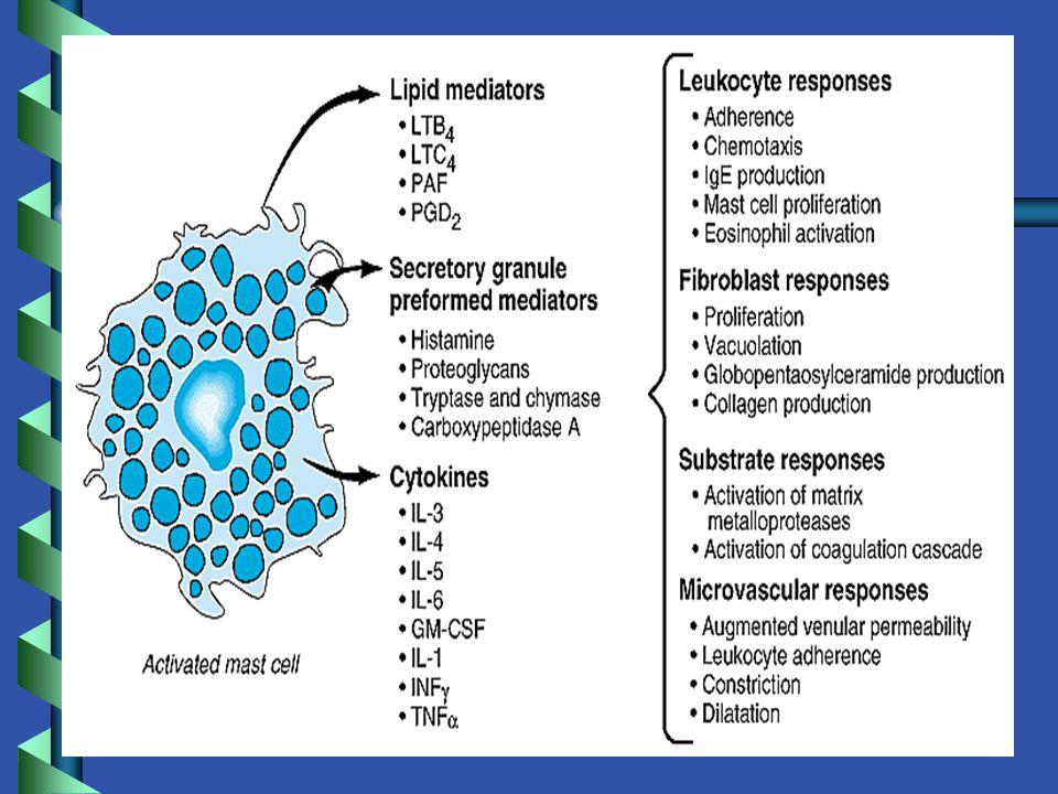 TİP II HİPERSENSİTİVİTE REAKSİYONLARI b b Sitotoksik bir reaksiyondur b b Antijen dokular üzerinde bulunan yapılardandır veya dokulara yapışan hapten denilen tek başına antijenik olmadığı halde dokuya yapıştığında antijenite kazanan maddelerdir.