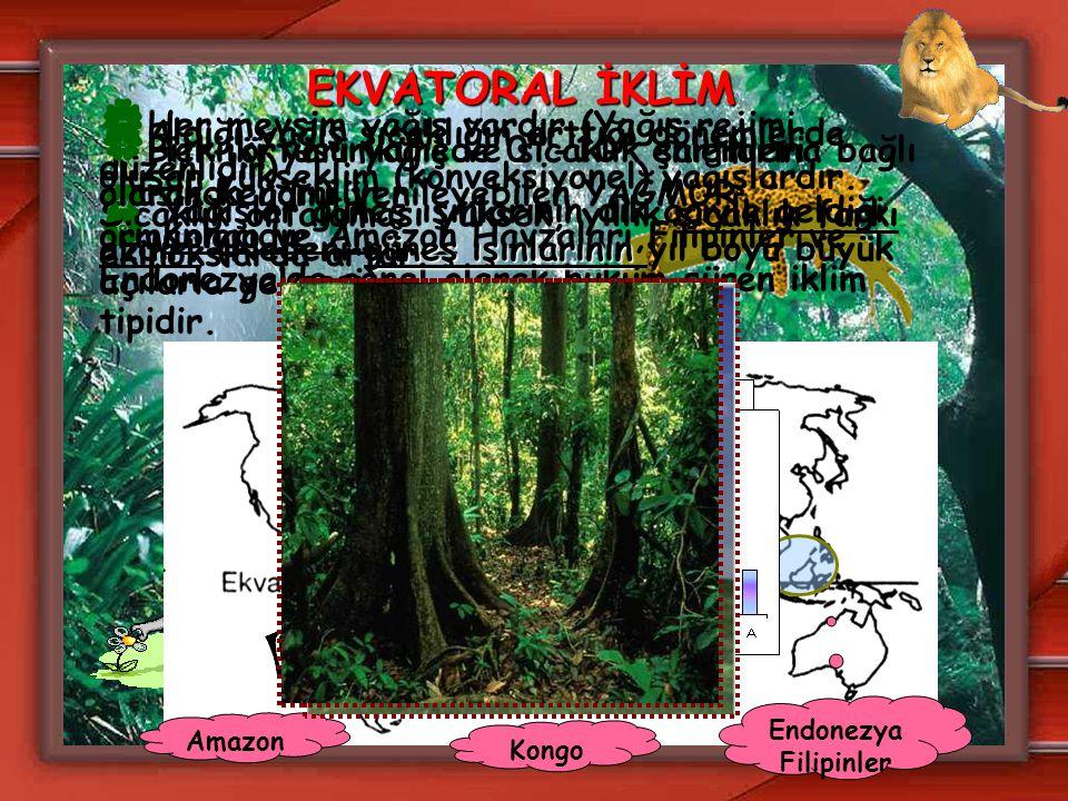 EKVATORAL İKLİM  Her iki yarımkürede 0º-10º enlemleri arasında görülür.  Kongo ve Amazon Havzaları,Filipinler ve Endonezya'da genel olarak hüküm sür