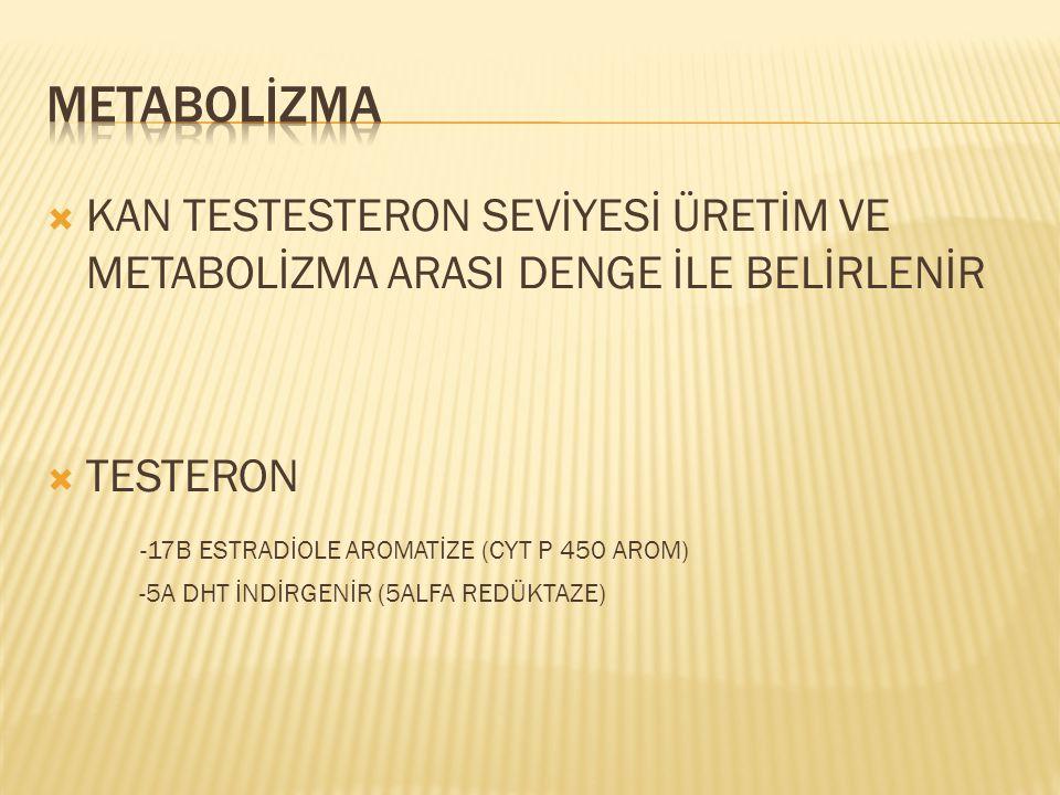  KAN TESTESTERON SEVİYESİ ÜRETİM VE METABOLİZMA ARASI DENGE İLE BELİRLENİR  TESTERON -17B ESTRADİOLE AROMATİZE (CYT P 450 AROM) -5A DHT İNDİRGENİR (