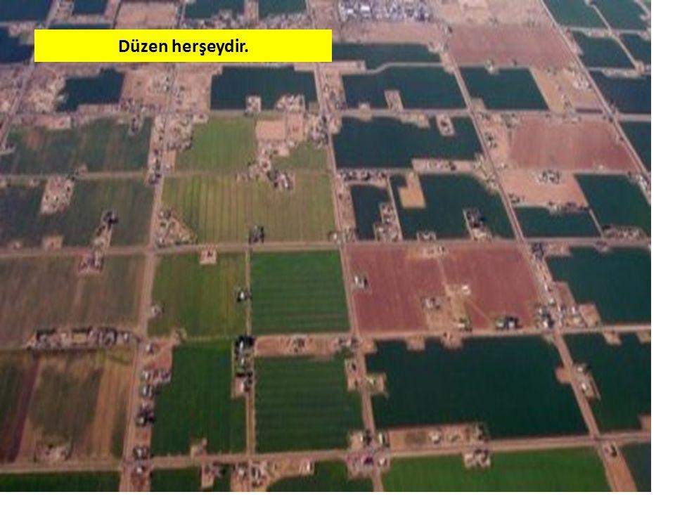 Bu söylediklerimizi -Toprak cinsi: Toprağın killi,humuslu,kumlu vb olması.