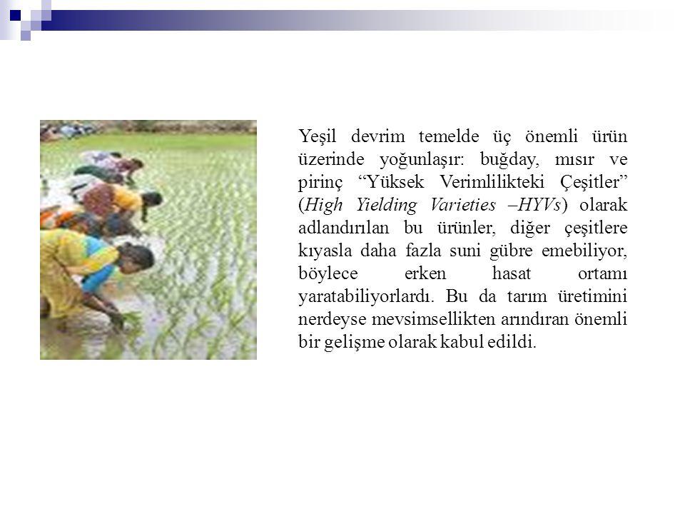 """Yeşil devrim temelde üç önemli ürün üzerinde yoğunlaşır: buğday, mısır ve pirinç """"Yüksek Verimlilikteki Çeşitler"""" (High Yielding Varieties –HYVs) olar"""