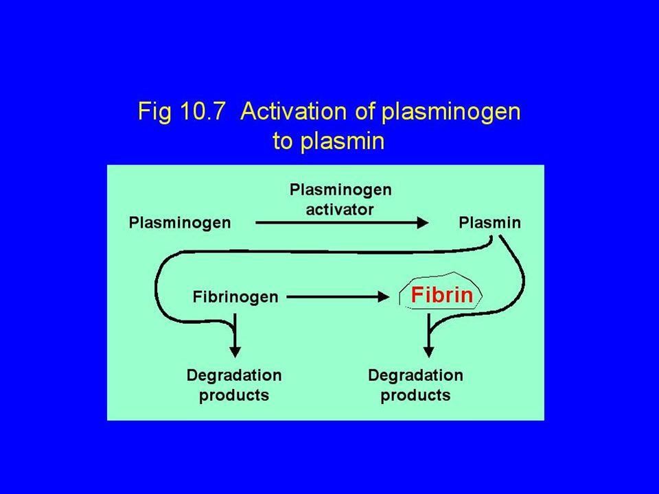 Fibrin ağıda Fibrin Fak. I (Fibrinojen) Fak.V Fak.VIII Fak.II (Protrombin) Fak. XII