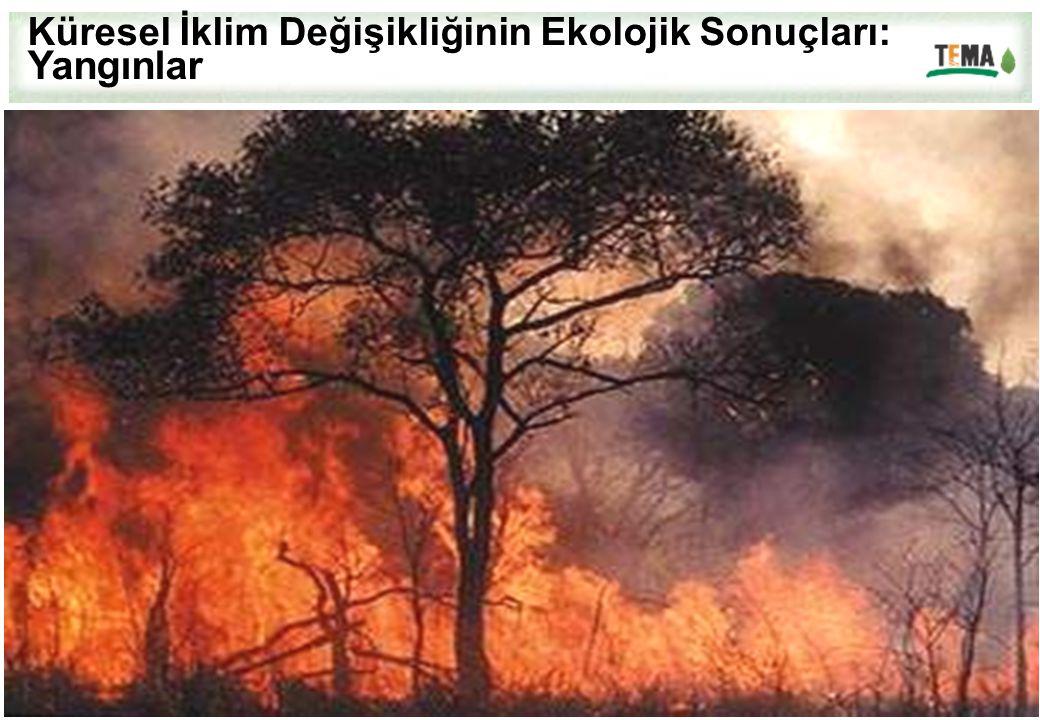 Küresel İklim Değişikliğinin Ekolojik Sonuçları: Yangınlar