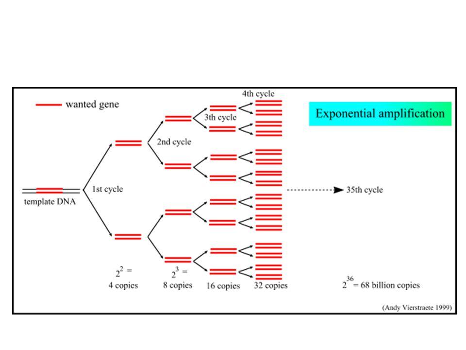 PCR, bir çeşit in vitro klonlama dır.