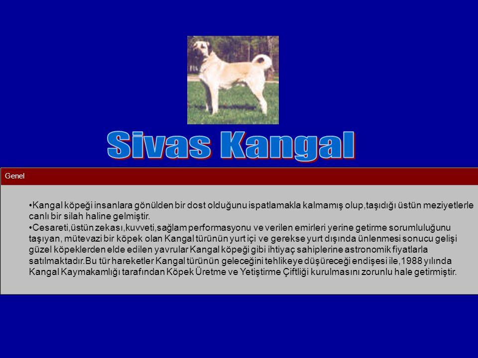 Genel Kangal köpeği insanlara gönülden bir dost olduğunu ispatlamakla kalmamış olup,taşıdığı üstün meziyetlerle canlı bir silah haline gelmiştir. Cesa