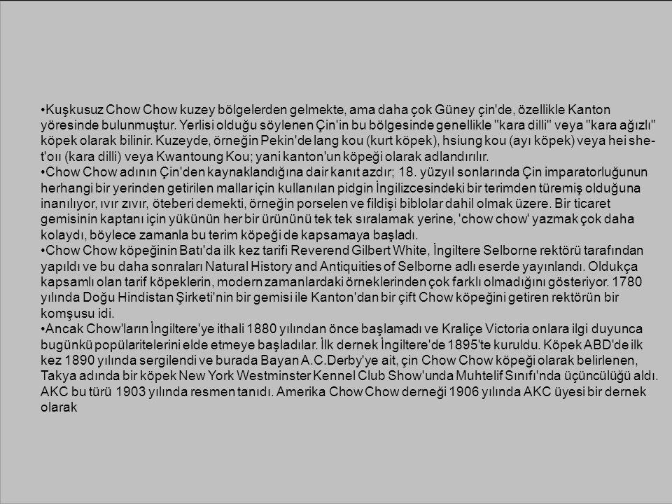 Kuşkusuz Chow Chow kuzey bölgelerden gelmekte, ama daha çok Güney çin'de, özellikle Kanton yöresinde bulunmuştur. Yerlisi olduğu söylenen Çin'in bu bö