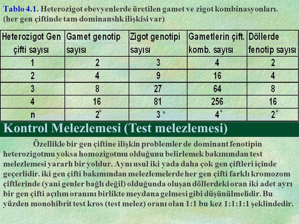 Tablo 4.1. Heterozigot ebevyenlerde üretilen gamet ve zigot kombinasyonları. (her gen çiftinde tam dominanslık ilişkisi var) Özellikle bir gen çiftine