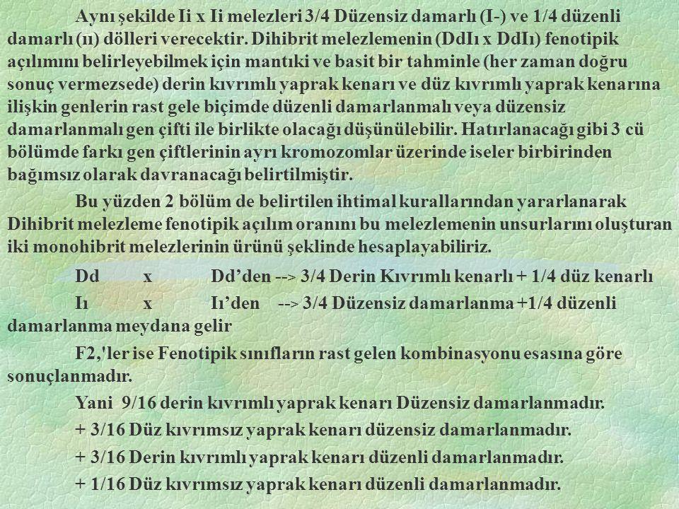 D - = Uzun bitki ;h1 h1 = Kılsız gövde dd = Cüce bitki ;h1 h2 = Dağınık kısa kıllar h2 h2 = çok kıllı gövde (Ddh1h2) genotipinde iki birey melezlendiğinde döller aşağıdaki gibi olacaktır.