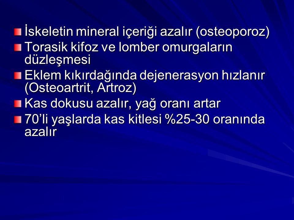 İskeletin mineral içeriği azalır (osteoporoz) Torasik kifoz ve lomber omurgaların düzleşmesi Eklem kıkırdağında dejenerasyon hızlanır (Osteoartrit, Ar