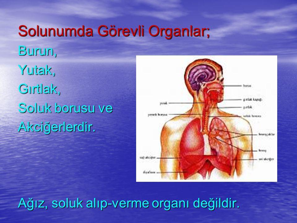 Solunumda Görevli Organlar; Burun,Yutak,Gırtlak, Soluk borusu ve Akciğerlerdir. Ağız, soluk alıp-verme organı değildir.