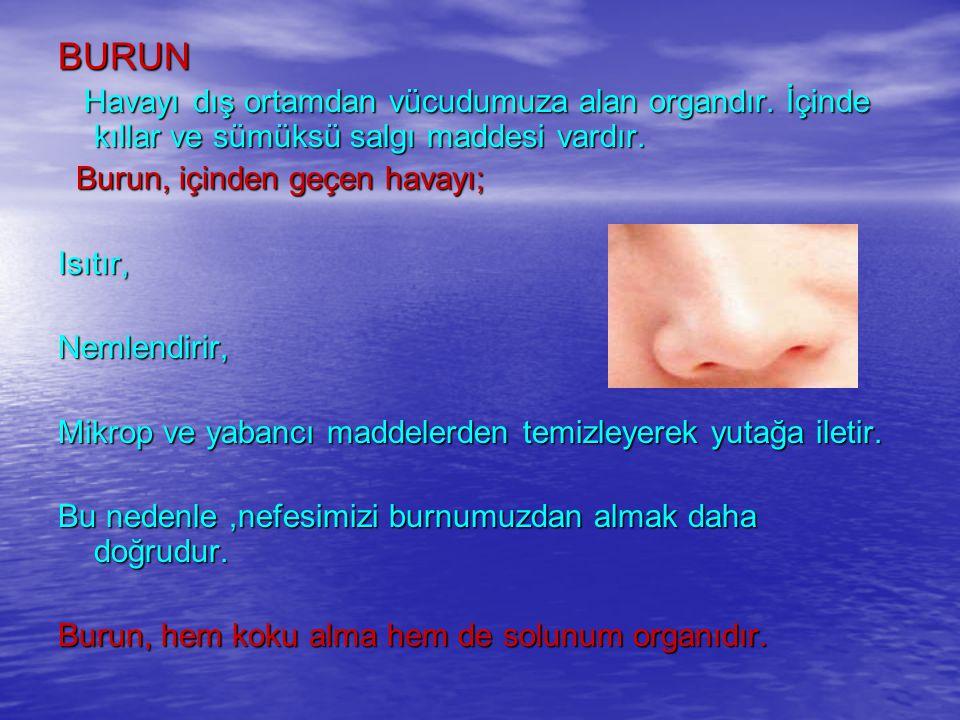BURUN Havayı dış ortamdan vücudumuza alan organdır.