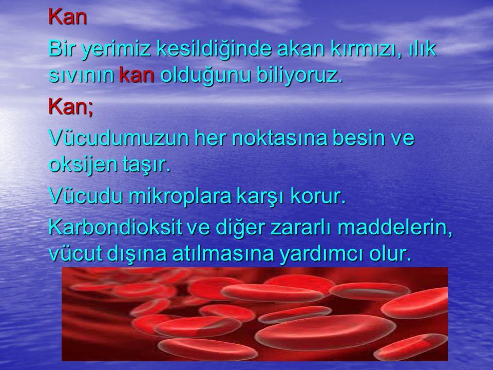 Kan Kan Bir yerimiz kesildiğinde akan kırmızı, ılık sıvının kan olduğunu biliyoruz. Bir yerimiz kesildiğinde akan kırmızı, ılık sıvının kan olduğunu b