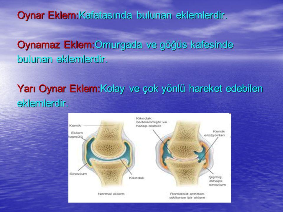 Kas:Vücudumuza biçim kazandıran, iskeletimizi ve iç organlarımızı hareket ettiren yapılara denir.