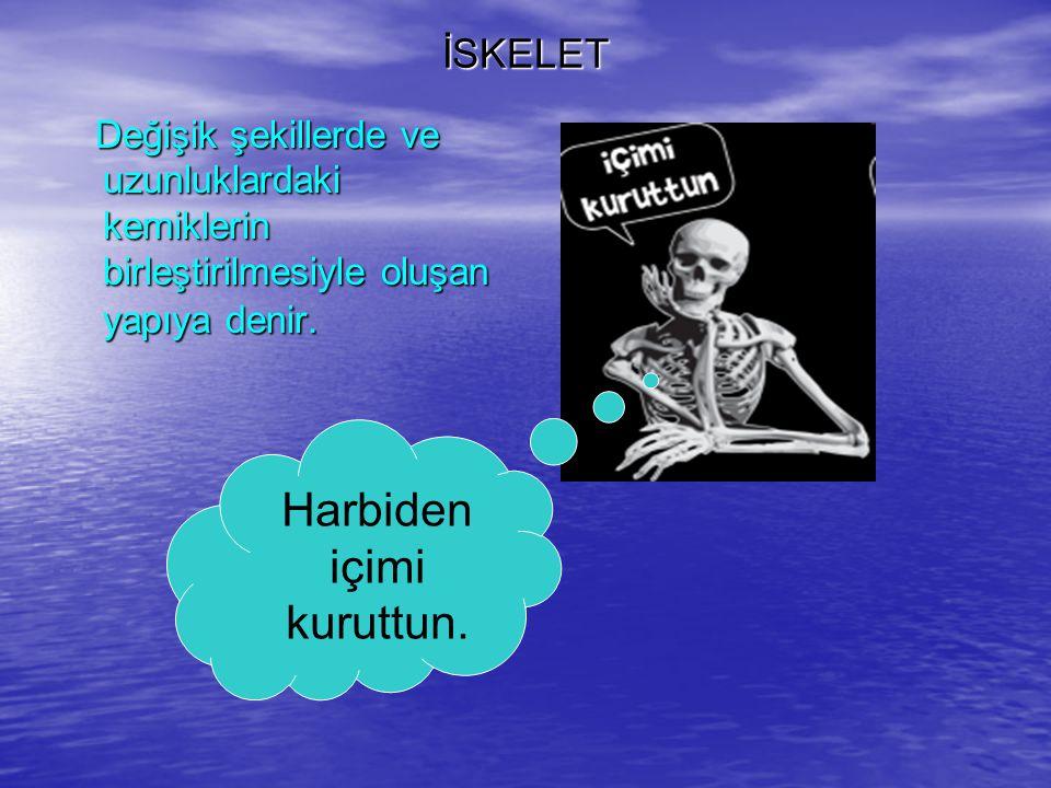 İSKELET Değişik şekillerde ve uzunluklardaki kemiklerin birleştirilmesiyle oluşan yapıya denir. Değişik şekillerde ve uzunluklardaki kemiklerin birleş