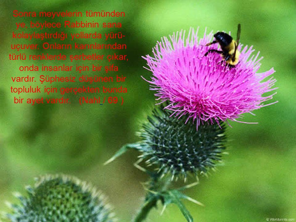 Sonra meyvelerin tümünden ye, böylece Rabbinin sana kolaylaştırdığı yollarda yürü- uçuver. Onların karınlarından türlü renklerde şerbetler çıkar, onda