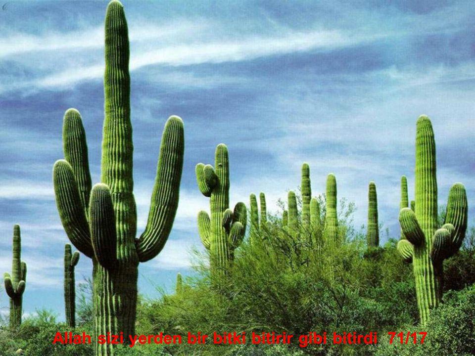 Allah sizi yerden bir bitki bitirir gibi bitirdi 71/17