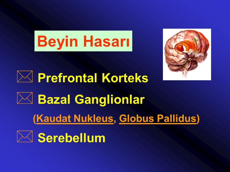 Beyin Hasarı * Prefrontal Korteks * Bazal Ganglionlar (Kaudat Nukleus, Globus Pallidus) * Serebellum