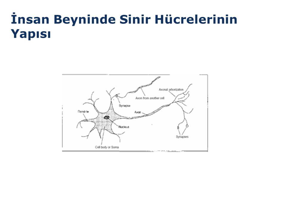 İnsan Beyninde Sinir Hücrelerinin Yapısı