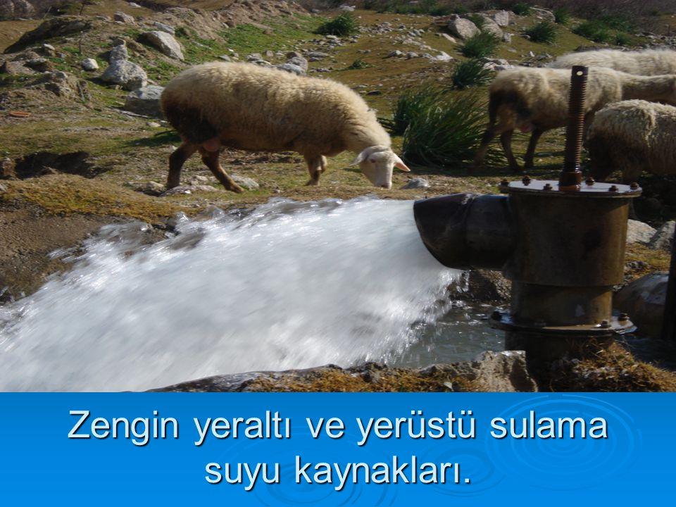 Zengin yeraltı ve yerüstü sulama suyu kaynakları.