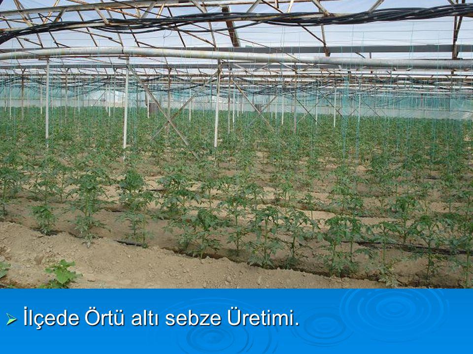  İlçede Örtü altı sebze Üretimi.