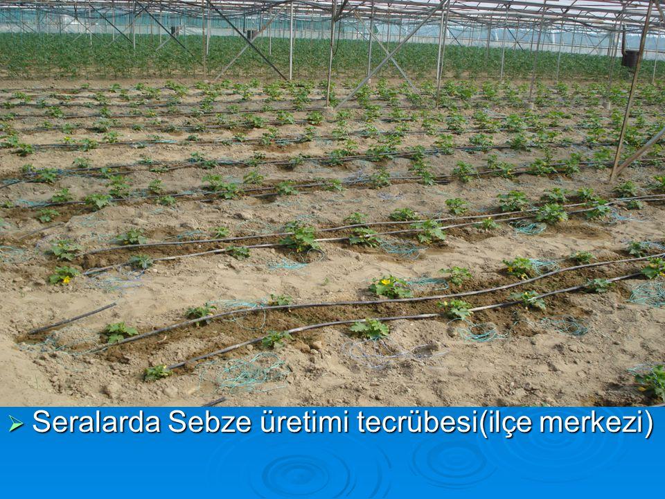  Seralarda Sebze üretimi tecrübesi(ilçe merkezi)