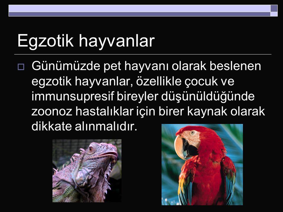 Egzotik hayvanlar  Günümüzde pet hayvanı olarak beslenen egzotik hayvanlar, özellikle çocuk ve immunsupresif bireyler düşünüldüğünde zoonoz hastalıkl