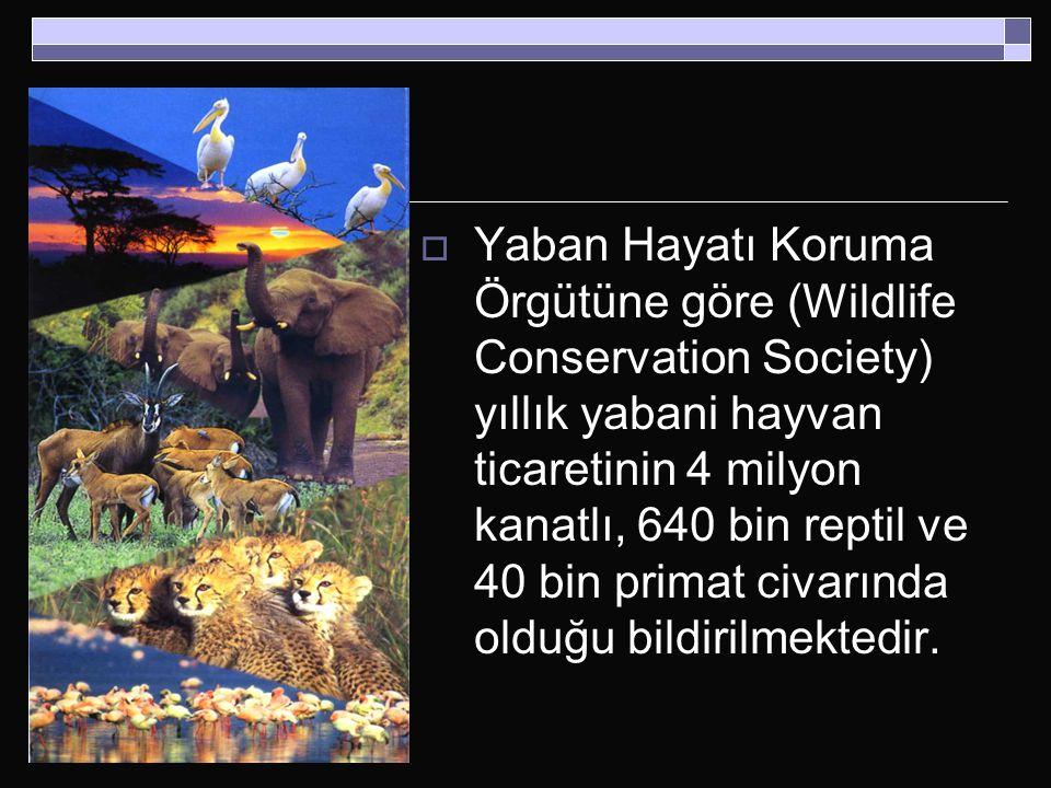  Yaban Hayatı Koruma Örgütüne göre (Wildlife Conservation Society) yıllık yabani hayvan ticaretinin 4 milyon kanatlı, 640 bin reptil ve 40 bin primat