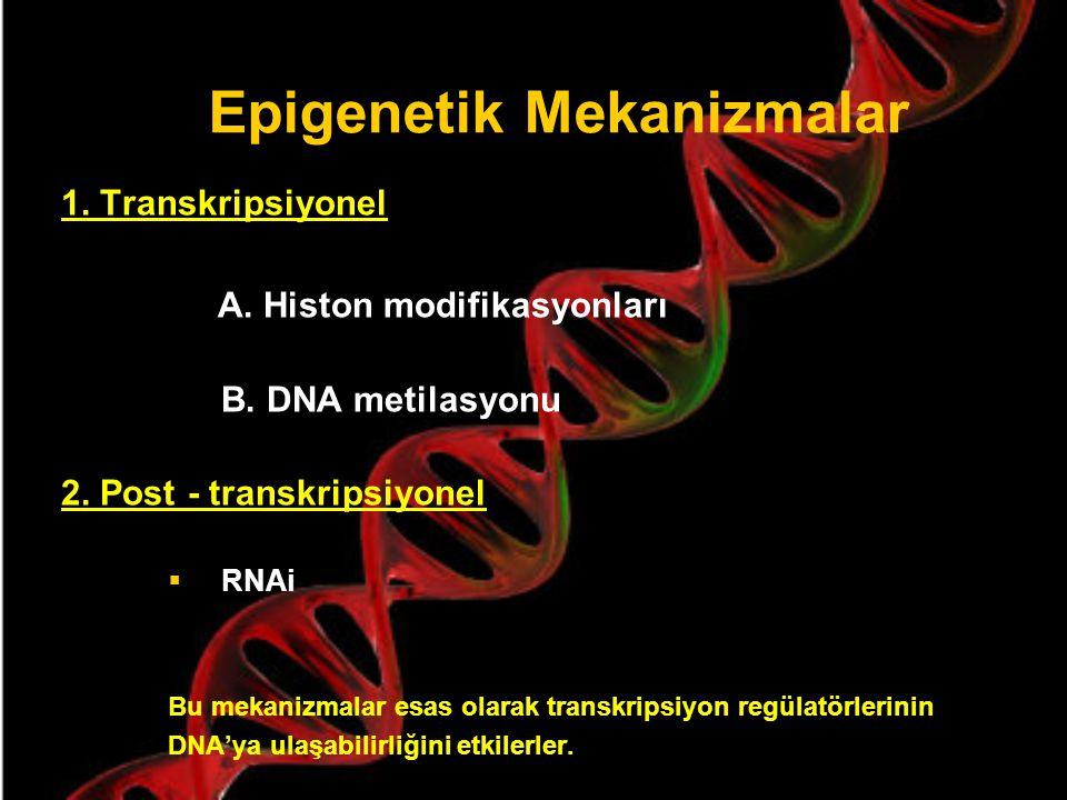 EPİGENETİK MEKANİZMALAR Epigenetik mekanizmalar DNA ve histonlar arasındaki ilişkiyi düzenleyerek, genlerin transkripsiyonel olarak aktif veya inaktif olmalarını sağlarlar.