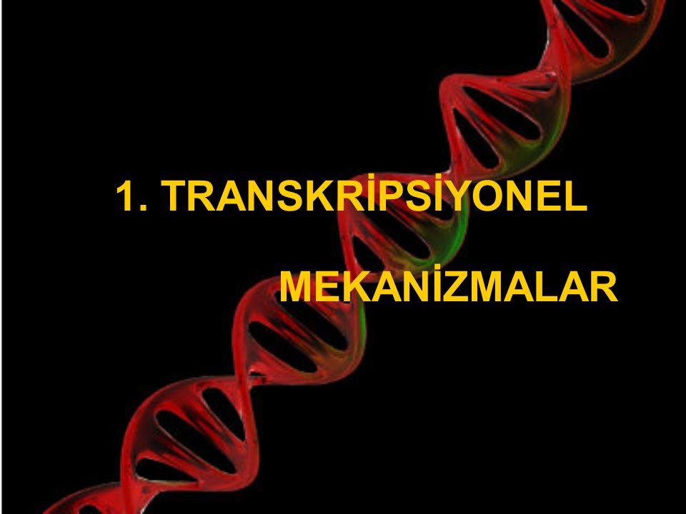 Epigenetik Mekanizmalar 1. Transkripsiyonel A. Histon modifikasyonları B. DNA metilasyonu 2. Post - transkripsiyonel  RNAi Bu mekanizmalar esas olara