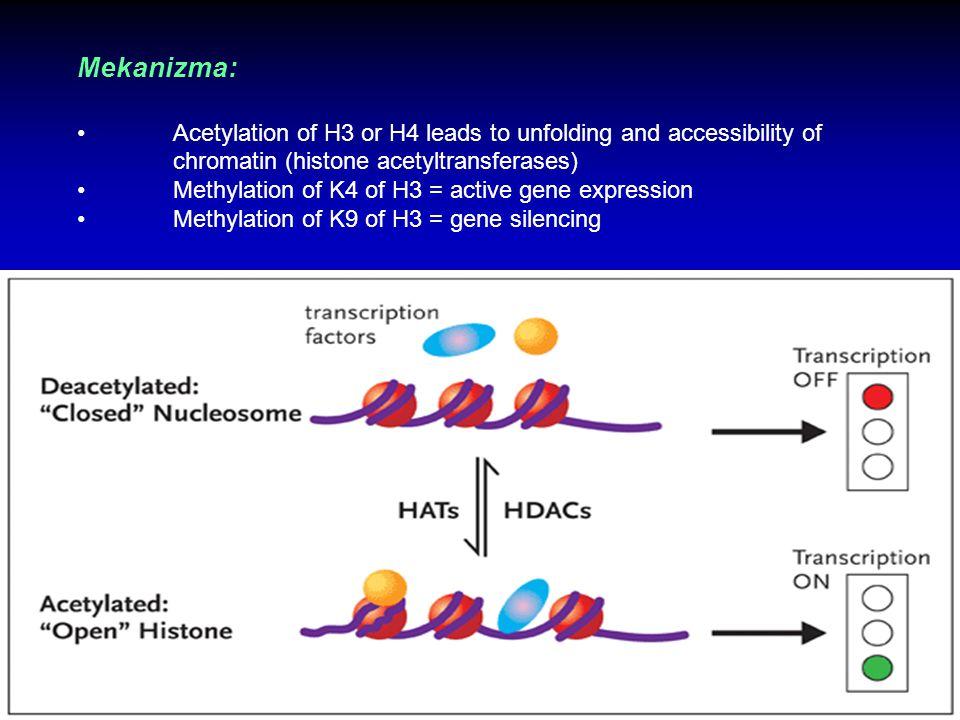 Histon Modifikasyonu