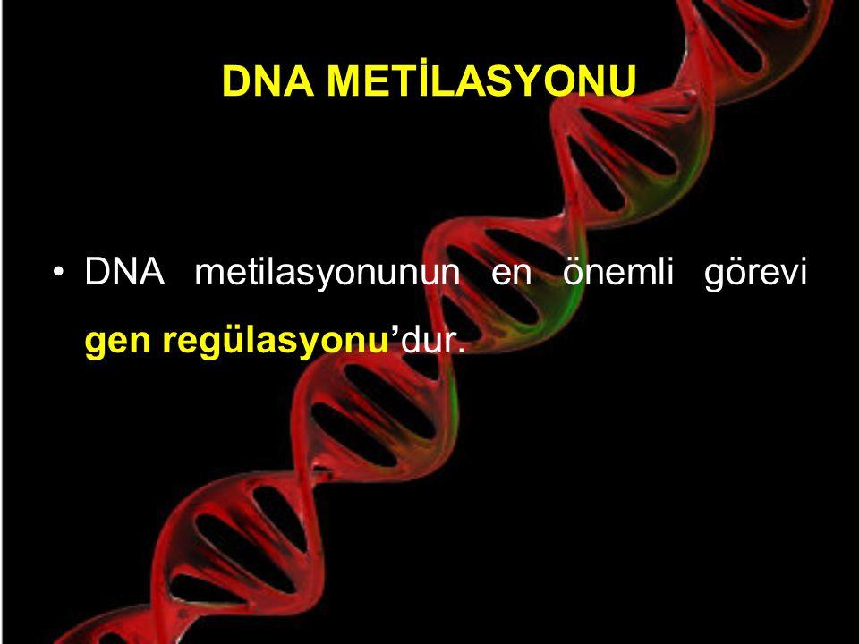 DNA METİLASYONU Gen ifadesini değiştirerek hücre fonksiyonlarını değiştiren ve bir metil grubunun kovalent şekilde DNA metiltransferaz (DNMT) katalizinde, bir CpG dinükleotidindeki Sitozinin 5.
