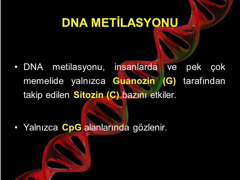 DNA metilasyon özellikleri Transkripsiyonal silencing Genomu transposizyondan koruma Genomik imprinting X inaktivasyonu Doku spesifik gen anlatımı