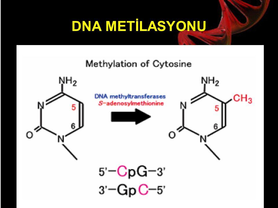 DNA METİLASYONU