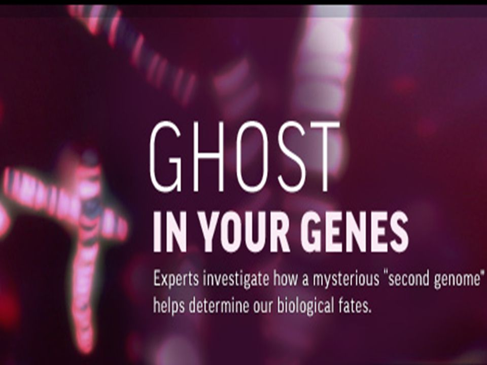 DNA METİLASYONU DNA metilasyonunun en önemli görevi gen regülasyonu'dur.