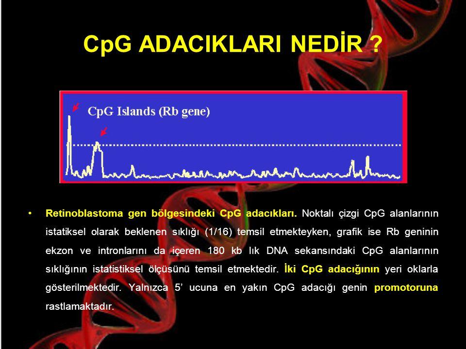 GC Baskılanması İnsan genomunun başından sonuna kadar 300- 3000 bç uzunluğundaki küçük alanlar haricinde, çok belirgindir. Bu alanlara CpG adacıkları