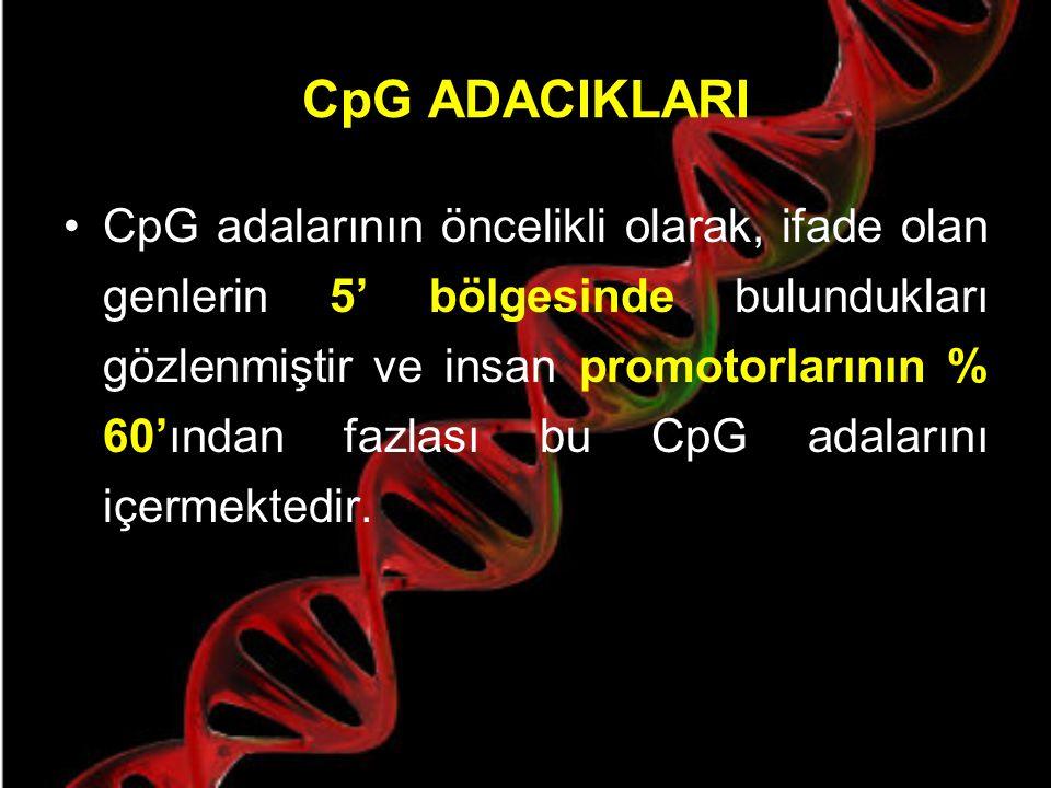 CpG ADACIKLARI NEDİR ? Retinoblastoma gen bölgesindeki CpG adacıkları. Noktalı çizgi CpG alanlarının istatiksel olarak beklenen sıklığı (1/16) temsil