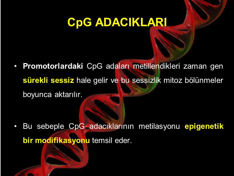 CpG ADACIKLARI CpG adalarının öncelikli olarak, ifade olan genlerin 5' bölgesinde bulundukları gözlenmiştir ve insan promotorlarının % 60'ından fazlası bu CpG adalarını içermektedir.