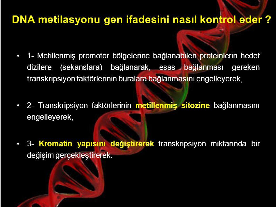 Bir genin metillenme derecesi neyi ifade eder .