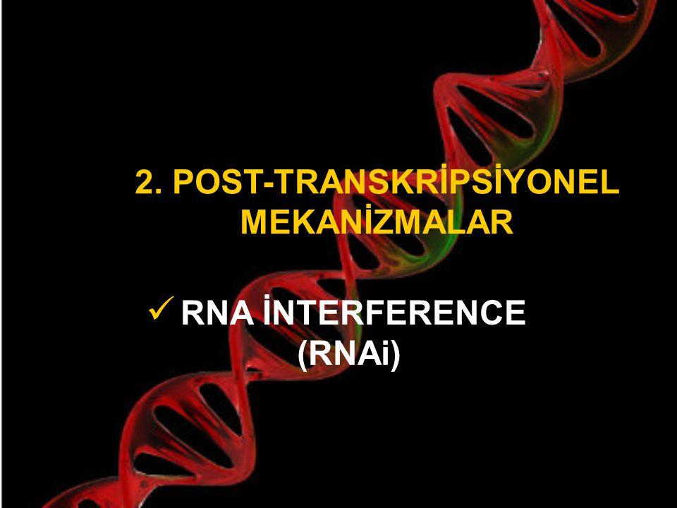 DNA metilasyonu gen ifadesini nasıl kontrol eder .