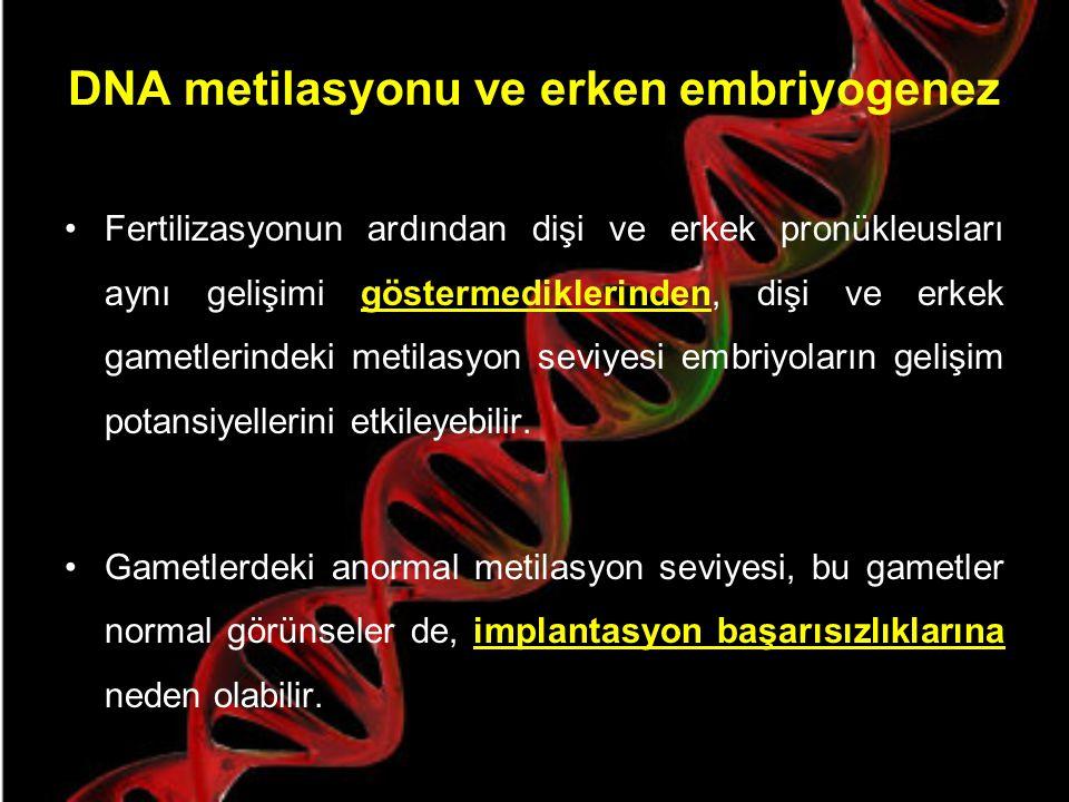 DNA metilasyonu ve erken embriyogenez Metilasyon somatik hücrelere kalıcı şekilde aktarılırken, gelecek nesilde bu metilasyon işaretleri ortadan kaldı