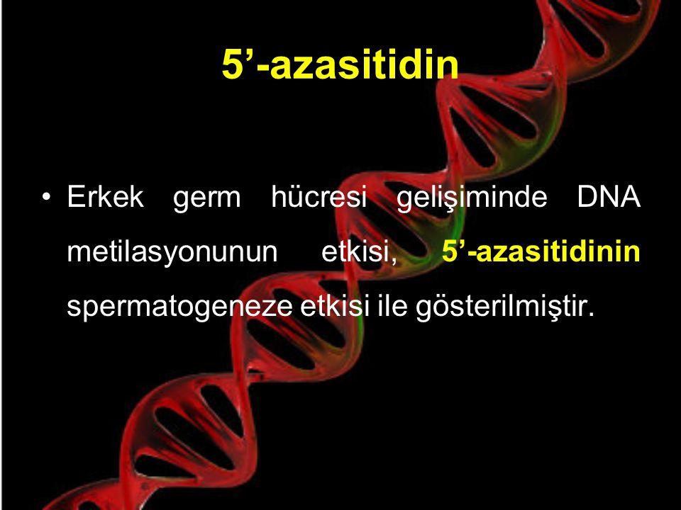 Sperm DNA'sının Metilasyonu Memeli sperm DNA'sının somatik hücrelerden daha az, premayotik germ hücrelerinden daha çok 5-metil-sitozin (metillenmiş DN