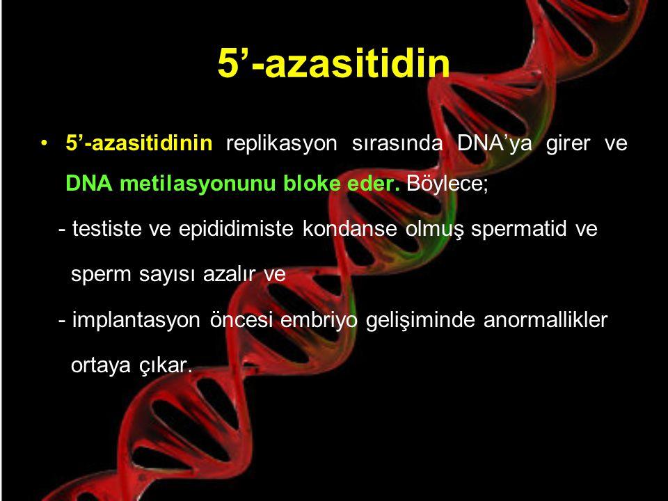 5'-azasitidin Erkek germ hücresi gelişiminde DNA metilasyonunun etkisi, 5'-azasitidinin spermatogeneze etkisi ile gösterilmiştir.