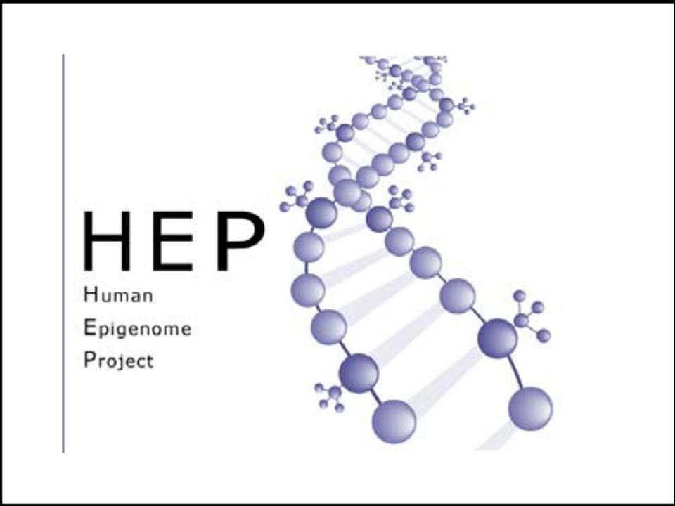 DNA metilasyonu ne zaman meydana gelir .
