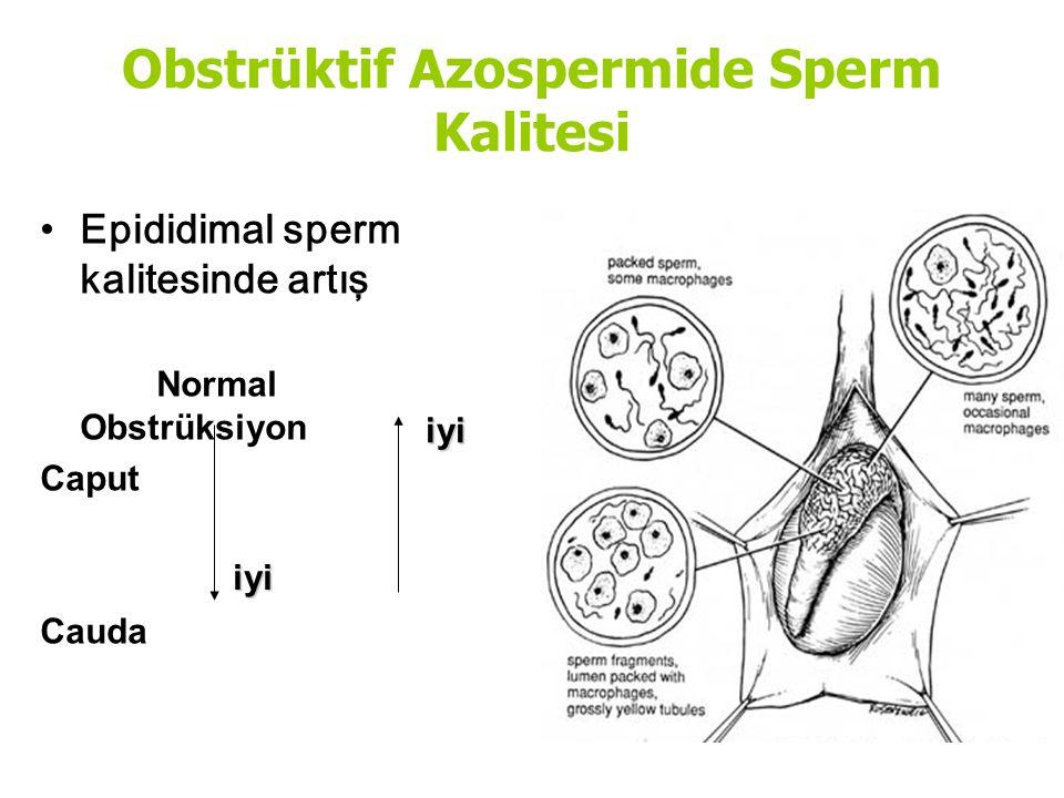 Obstrüktif Azospermide Sperm Kalitesi Epididimal sperm kalitesinde artış Normal Obstrüksiyon Caput Cauda iyi iyi