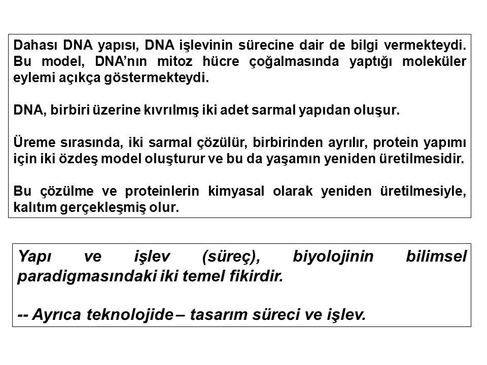 Dahası DNA yapısı, DNA işlevinin sürecine dair de bilgi vermekteydi. Bu model, DNA'nın mitoz hücre çoğalmasında yaptığı moleküler eylemi açıkça göster