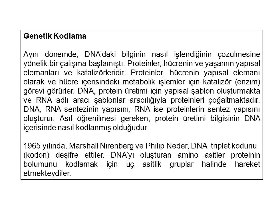 Genetik Kodlama Aynı dönemde, DNA'daki bilginin nasıl işlendiğinin çözülmesine yönelik bir çalışma başlamıştı. Proteinler, hücrenin ve yaşamın yapısal