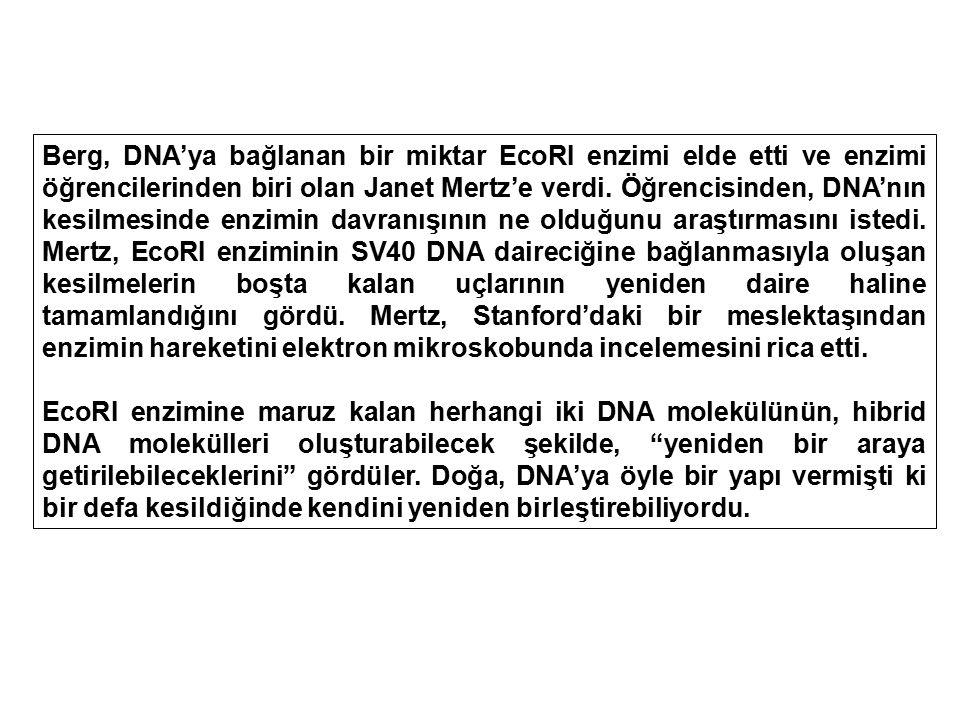 Berg, DNA'ya bağlanan bir miktar EcoRI enzimi elde etti ve enzimi öğrencilerinden biri olan Janet Mertz'e verdi. Öğrencisinden, DNA'nın kesilmesinde e